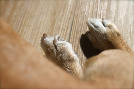 Mini DeLites with Pixy's feet