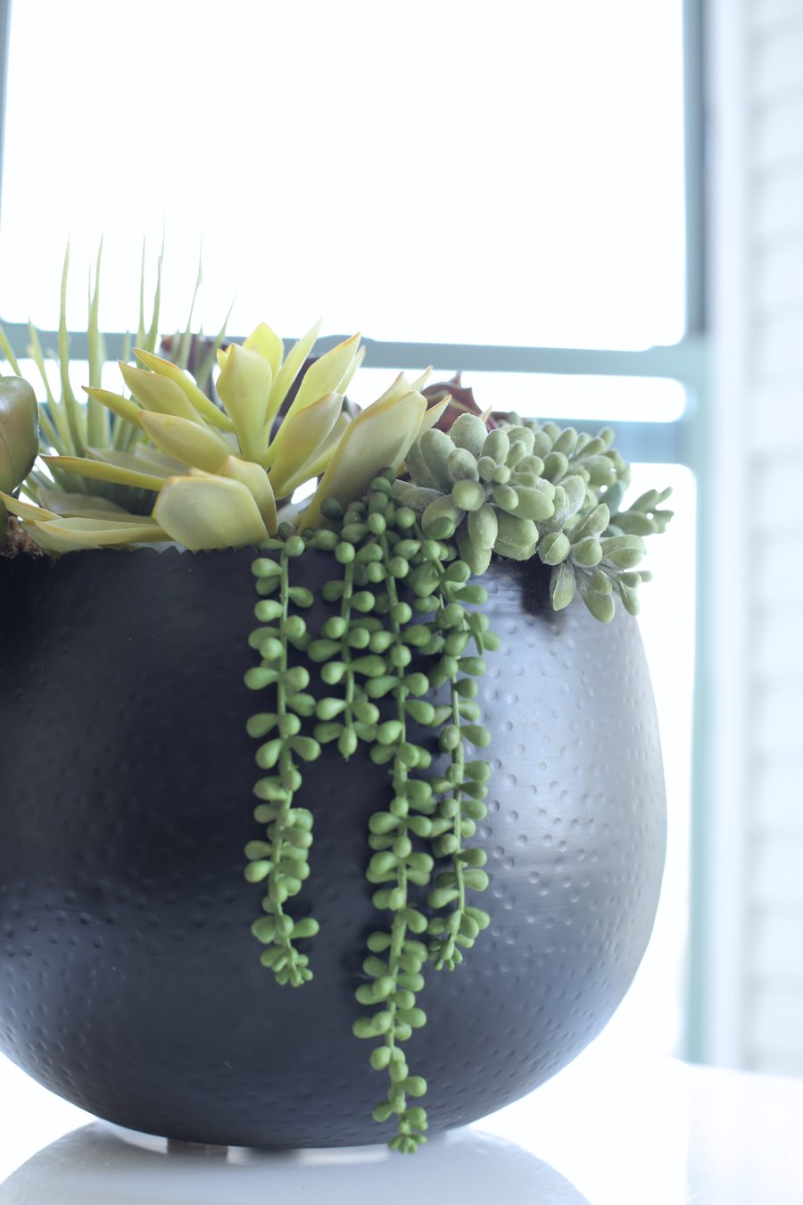 mini delites plants | by the skinny confidential