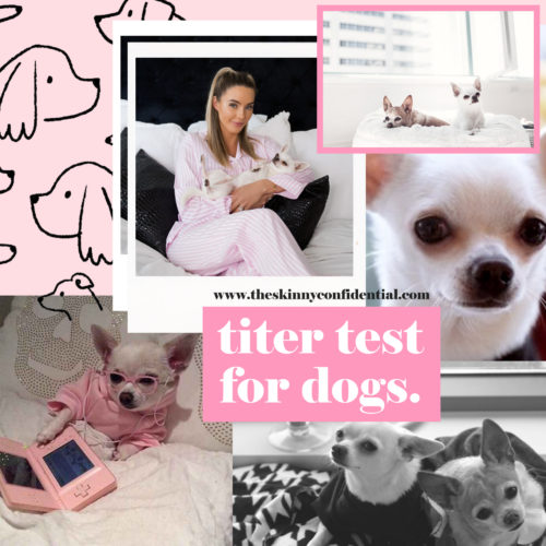 Titer Test For Dogs: If You Have a Pet, You Need To Know About This