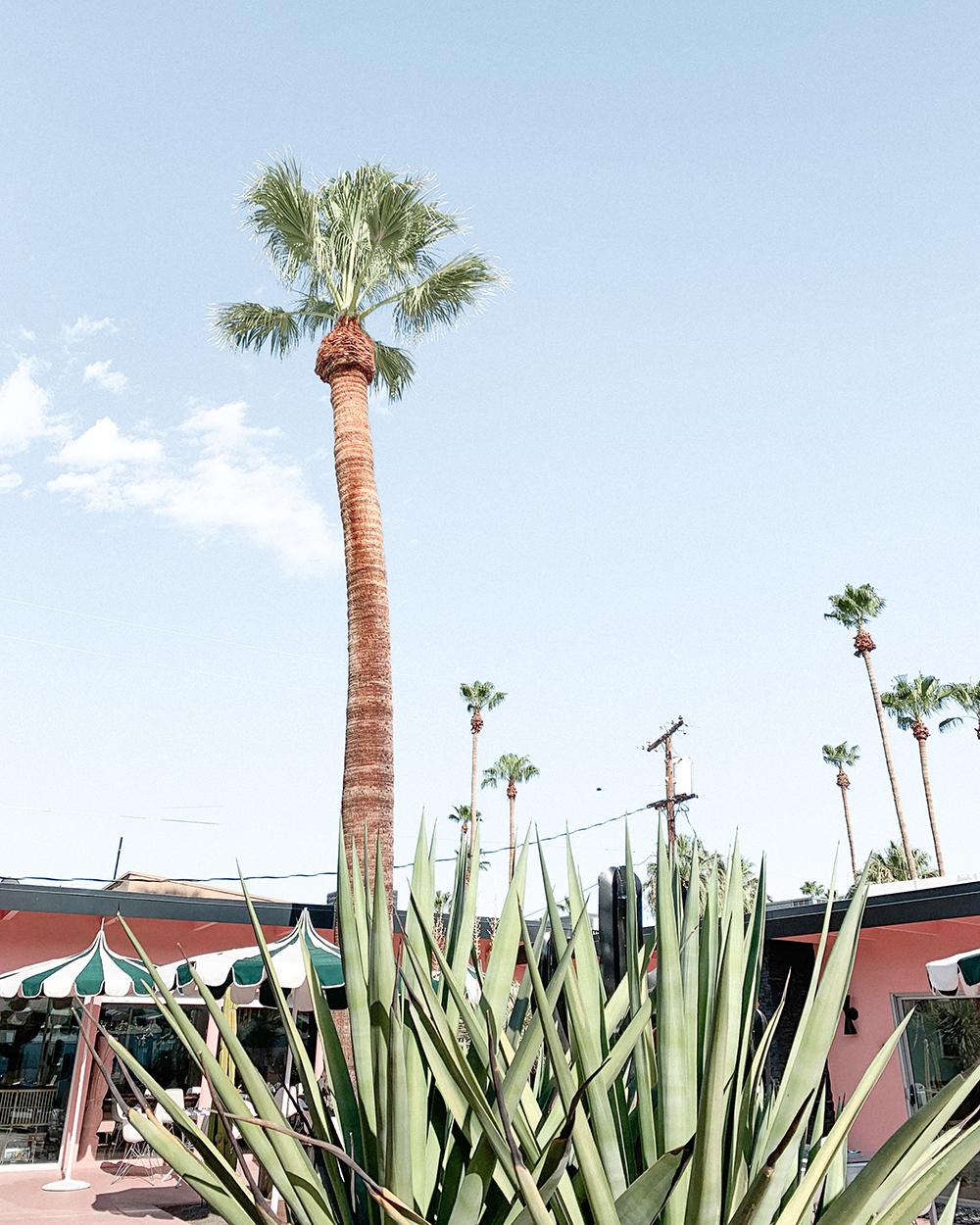 O hotel privado mais chique para você e seus amigos em Palm Springs 18