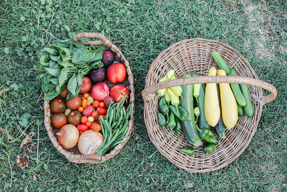 What to plant first in your garden