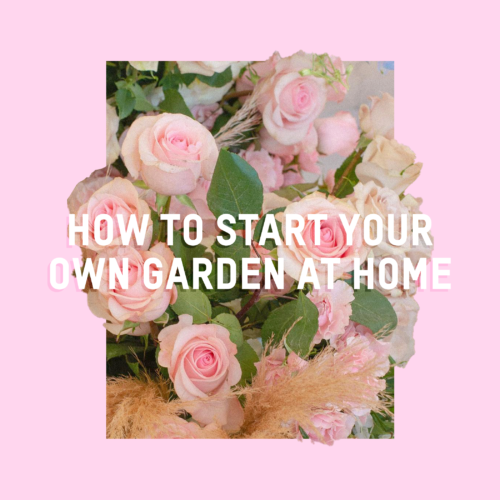 How To Start Your Own Garden At Home